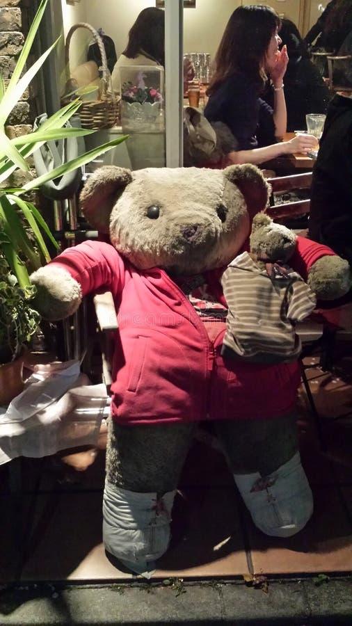 Медведь Chillin стоковые изображения rf