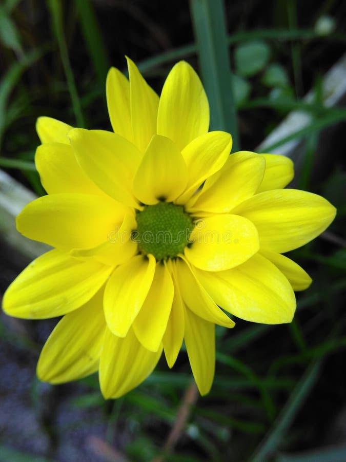 Медленный желтый цвет стоковые фотографии rf