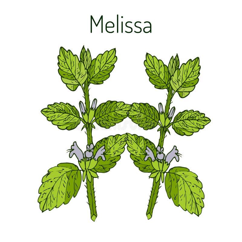 Мелисса иллюстрация вектора