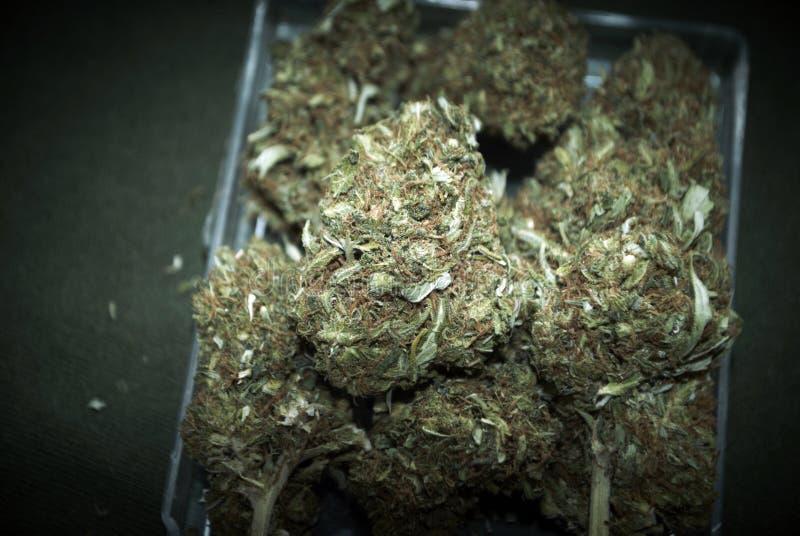 Медицинская марихуана RX стоковые изображения