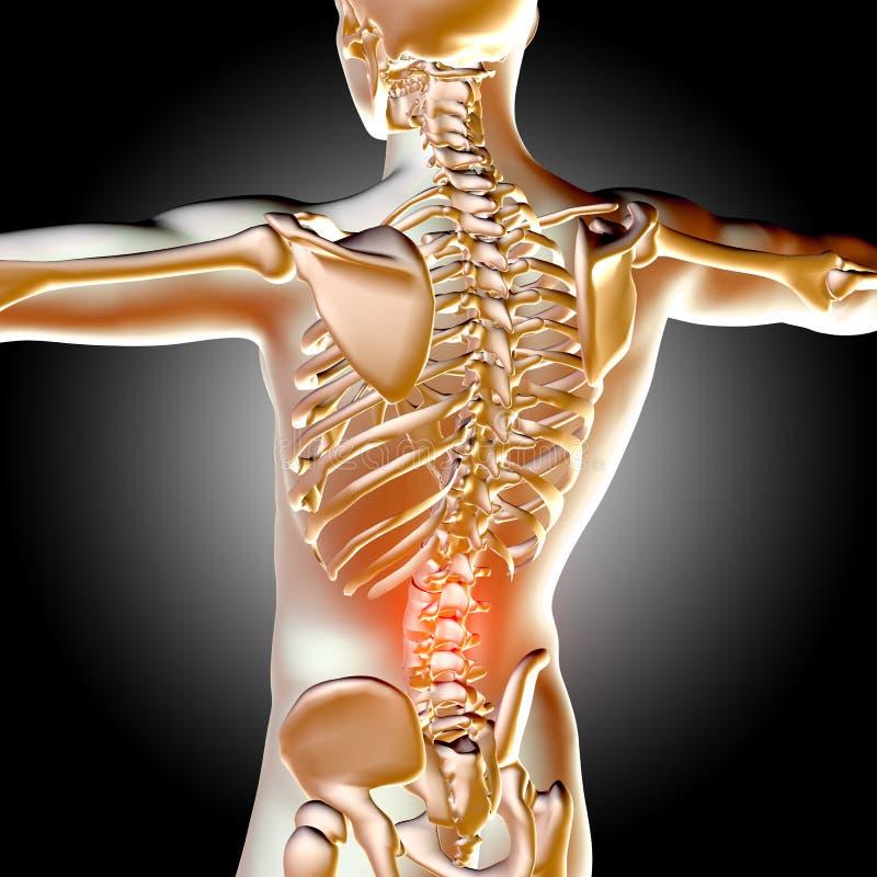 медицинская мужская диаграмма 3d с выделенной зоной боли иллюстрация вектора