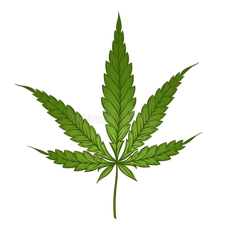 Медицинские лист зеленого цвета марихуаны изолированные над белой предпосылкой Иллюстрация вектора конопли иллюстрация штока
