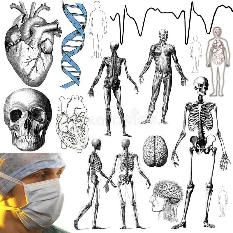 Медицинские и анатомические объекты - вырез иллюстрация вектора