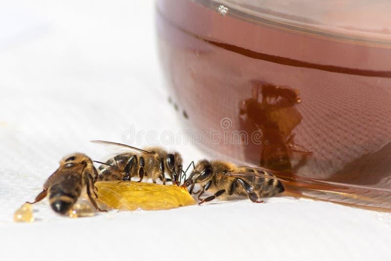 Мед и пчелы стоковые фотографии rf