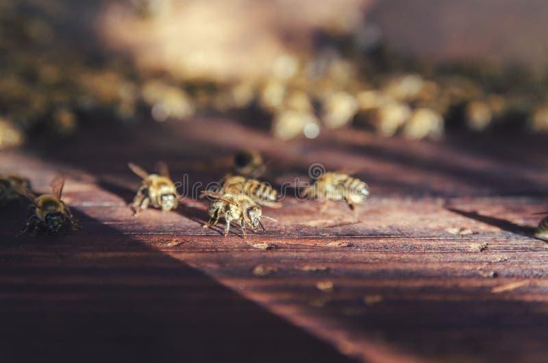 мед крапивницы семьи пчел стоковое фото rf