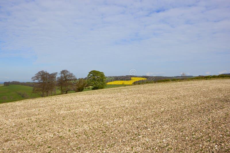 Меловые поле и деревья фасоли стоковое изображение rf