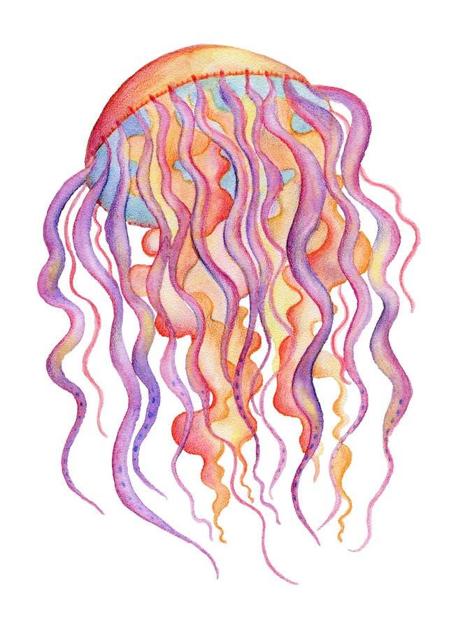 Медузы акварели изолированные на белой предпосылке иллюстрация штока