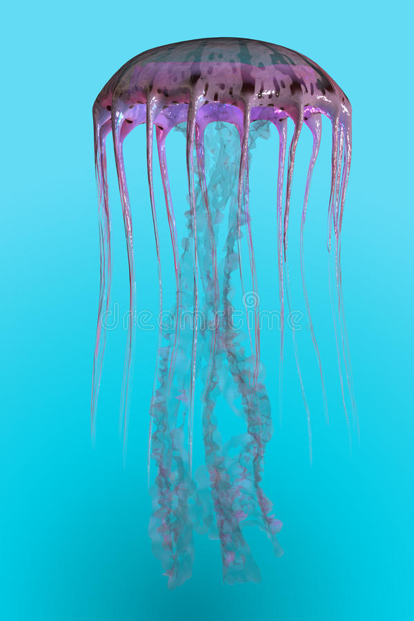 Медузы noctiluca Pelagia иллюстрация штока