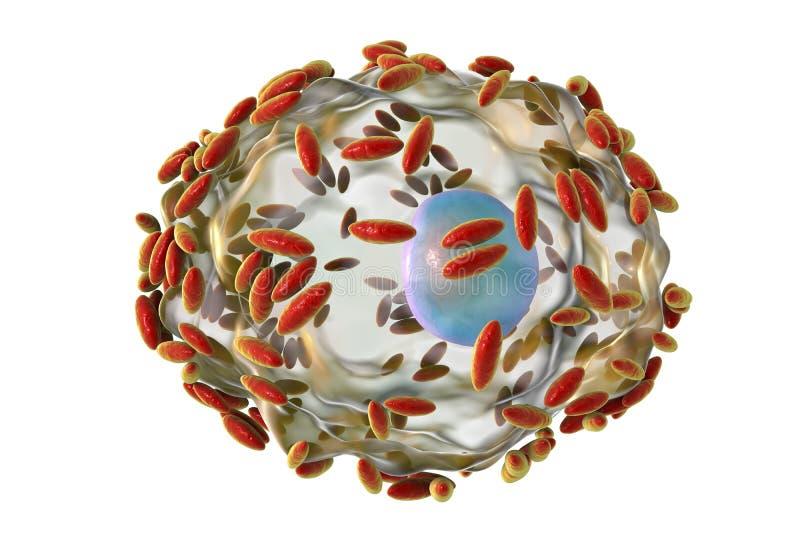 Микроскопический диагноз бактериального vaginosis Покровная клетка, так называемая клетка ключа покрыта с бактериями Gardnerella иллюстрация штока