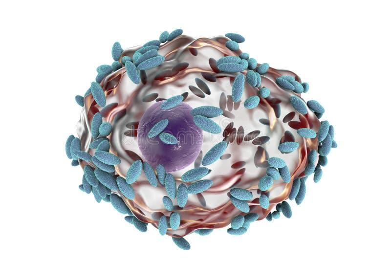 Микроскопический диагноз бактериального vaginosis Покровная клетка, так называемая клетка ключа покрыта с бактериями Gardnerella иллюстрация вектора