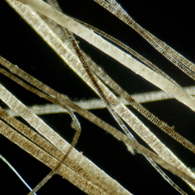 микроскоп волос вниз стоковые изображения rf