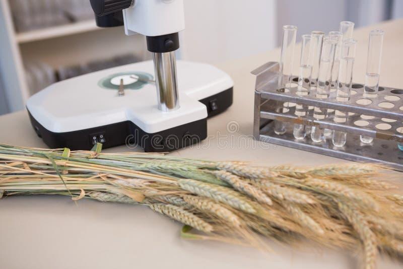 Микроскоп с трубками и снопом стоковая фотография rf