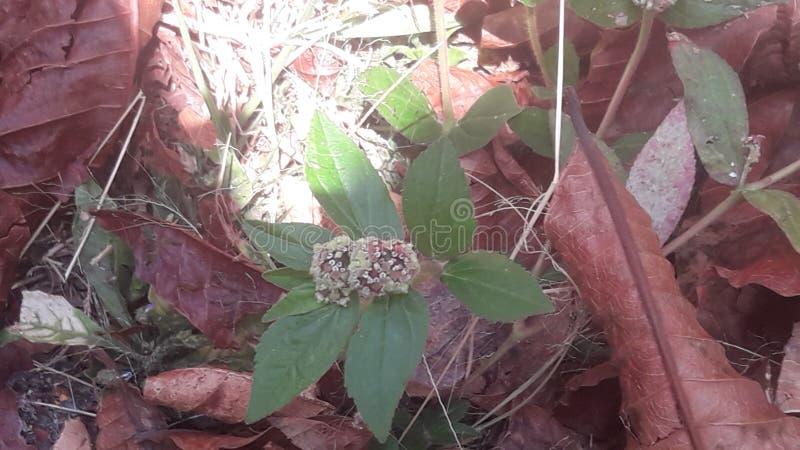 Микро- цветки стоковое фото rf