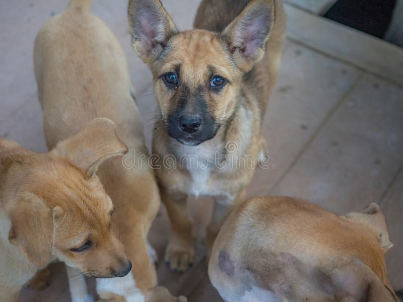 Милая бездомная собака стоковое изображение rf