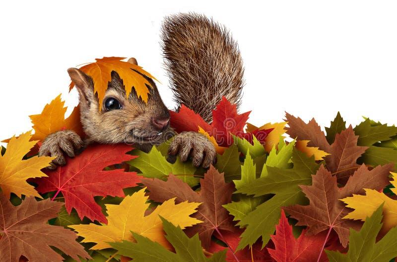 Милая белка играя в листьях иллюстрация штока