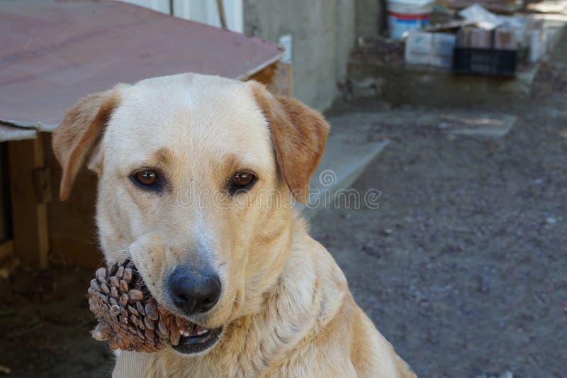 Милая белокурая собака стоковое фото