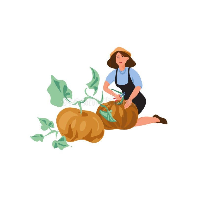 Милая женщина фермера собирает естественную большую тыкву иллюстрация вектора
