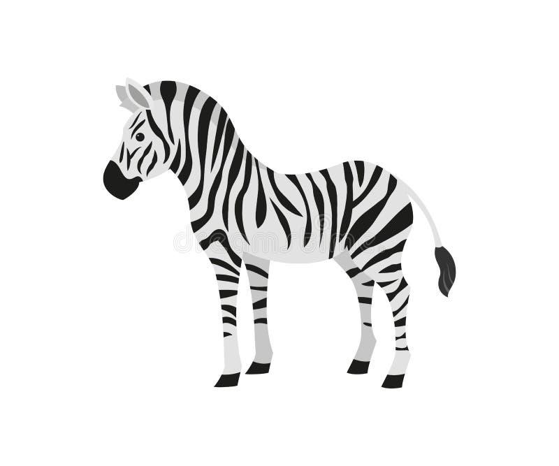 Милая зебра на белой предпосылке иллюстрация вектора