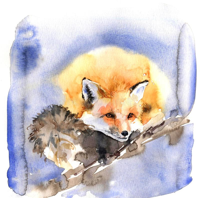 Милая иллюстрация акварели с оранжевой красной лисой Пушистый зверь спит сладко стоковые изображения rf