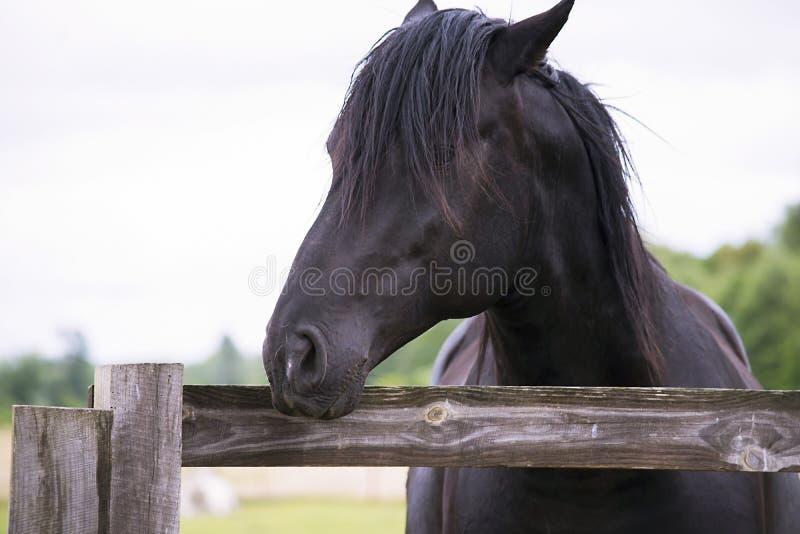 Милая лошадь на ферме стоковое изображение rf