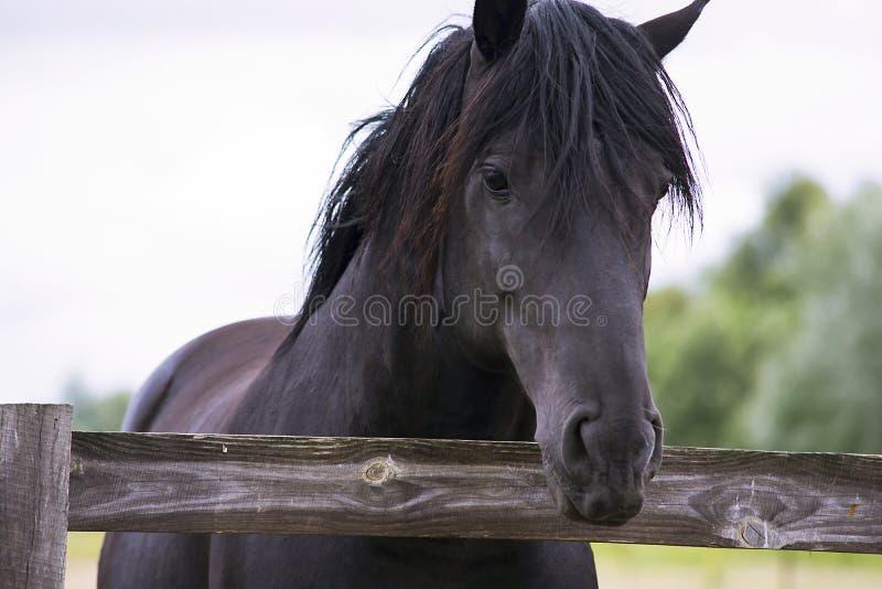 Милая лошадь на ферме стоковые фотографии rf