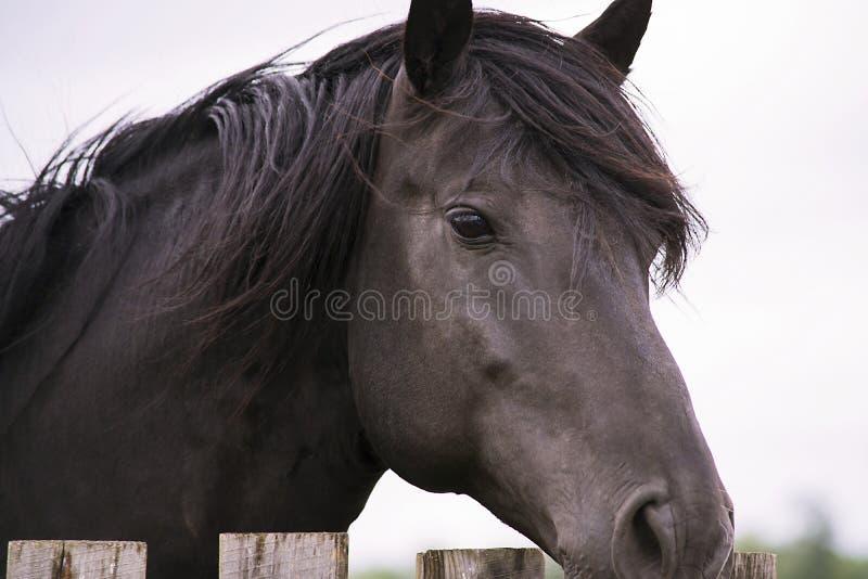 Милая лошадь на ферме стоковые изображения rf