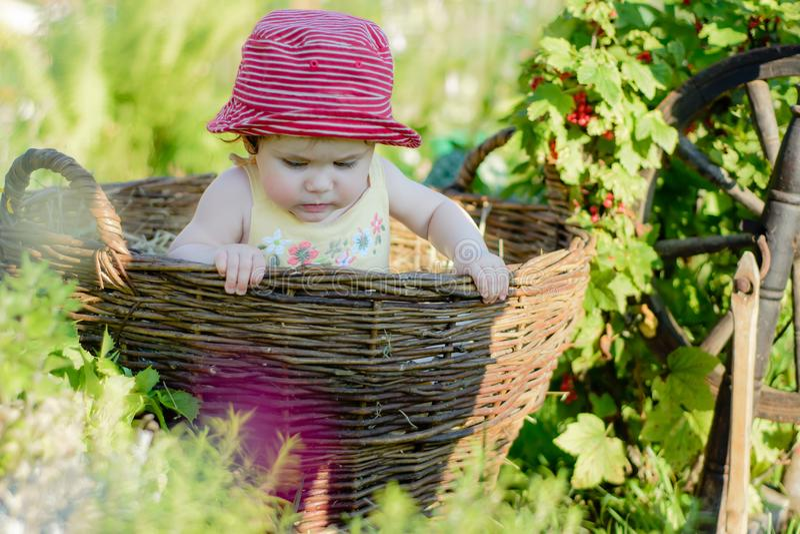 Милая маленькая девочка сидит на сене в корзине в саде стоковое фото rf