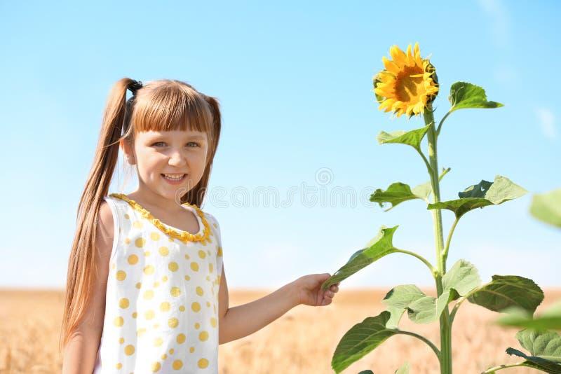 Милая маленькая девочка с солнцецветом в пшеничном поле на летний день стоковые изображения