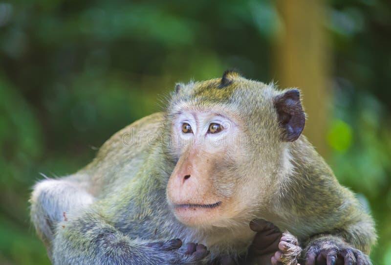Милая маленькая обезьяна вид родная к и жива в ce стоковые изображения rf