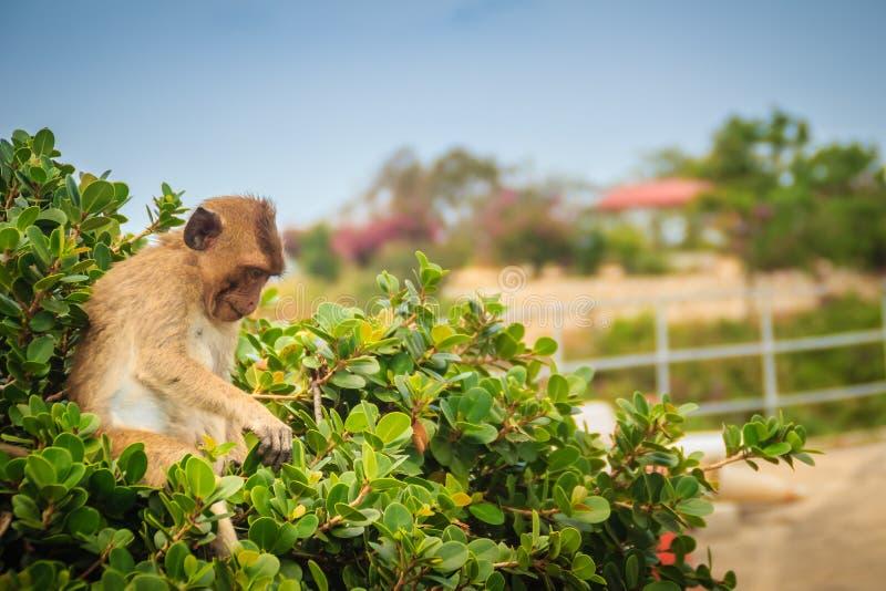Милая обезьяна в зеленом цвете еды дерева выходит стоковое изображение