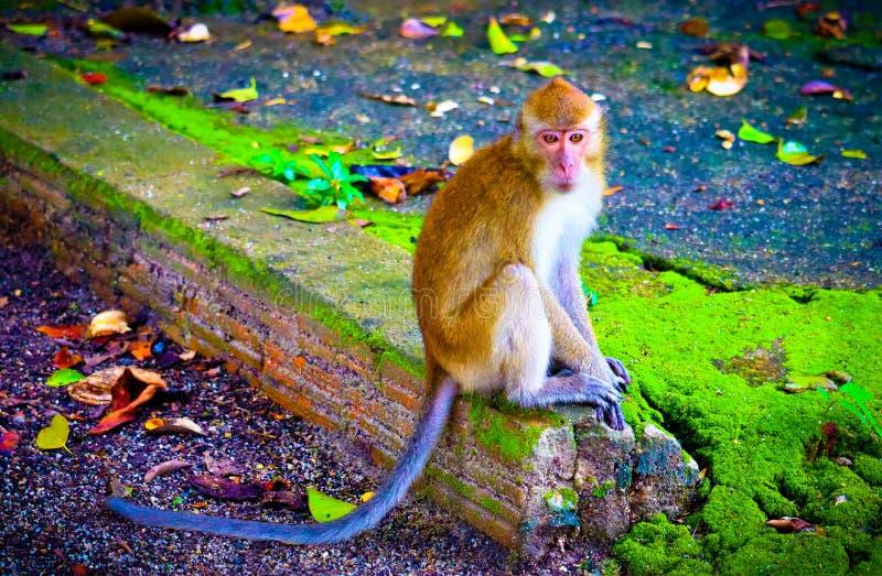 Милая обезьяна младенца стоковые изображения
