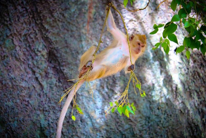 Милая обезьяна младенца стоковое изображение rf