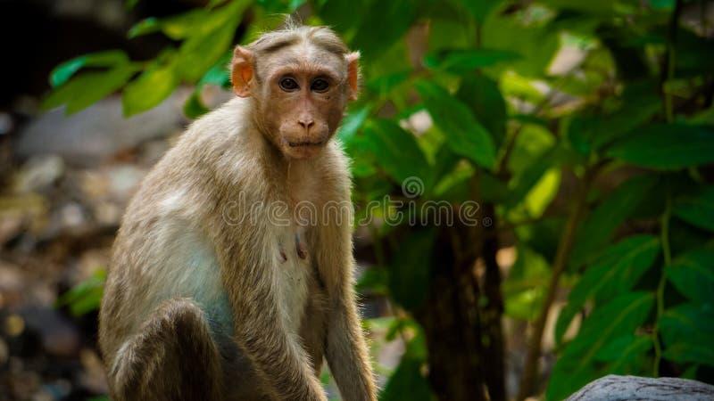Милая обезьяна на лесе стоковые фотографии rf
