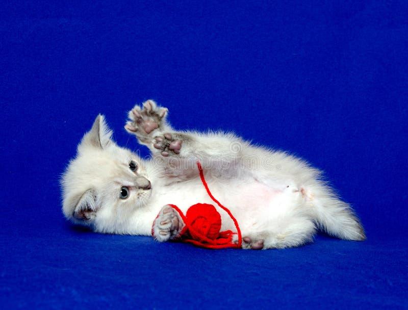 милая пряжа котенка стоковое изображение rf