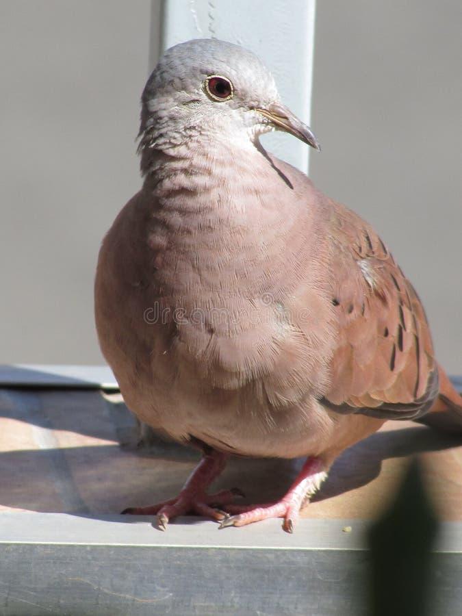 Милая птица стоковая фотография rf