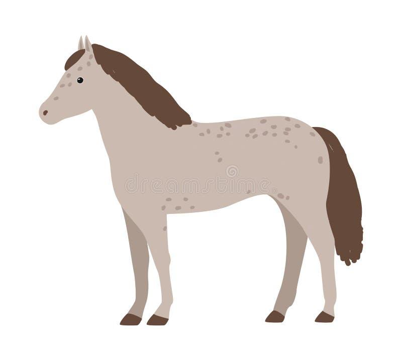 Милая серая лошадь изолированная на белой предпосылке Прелестный пони с гривой Животное смешного шаржа отечественное equine, ферм иллюстрация вектора