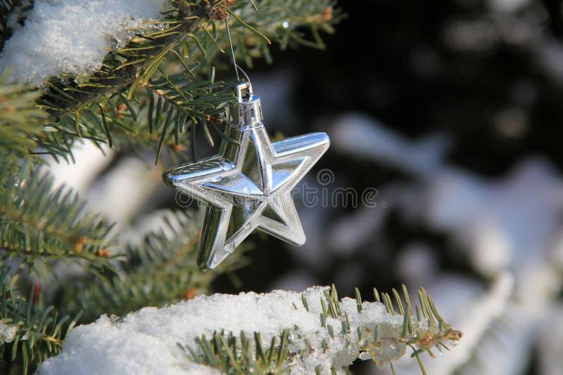 Милая серебряная смертная казнь через повешение орнамента рождества звезды от ветви снега покрыла дерево стоковые изображения