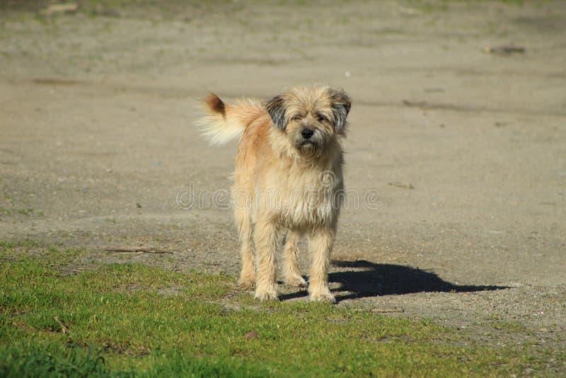 Милая собака в Галиции стоковое изображение