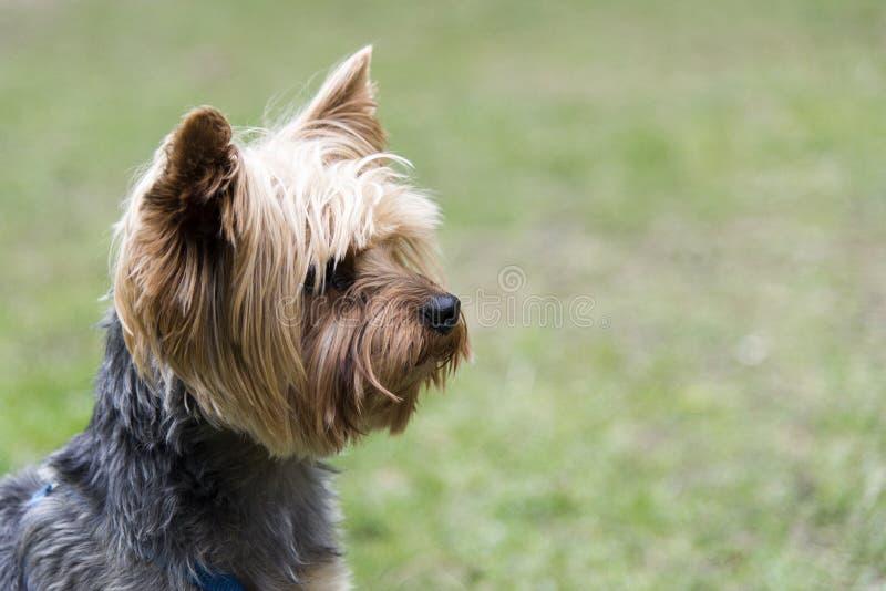 Милая собака в парке стоковые изображения rf