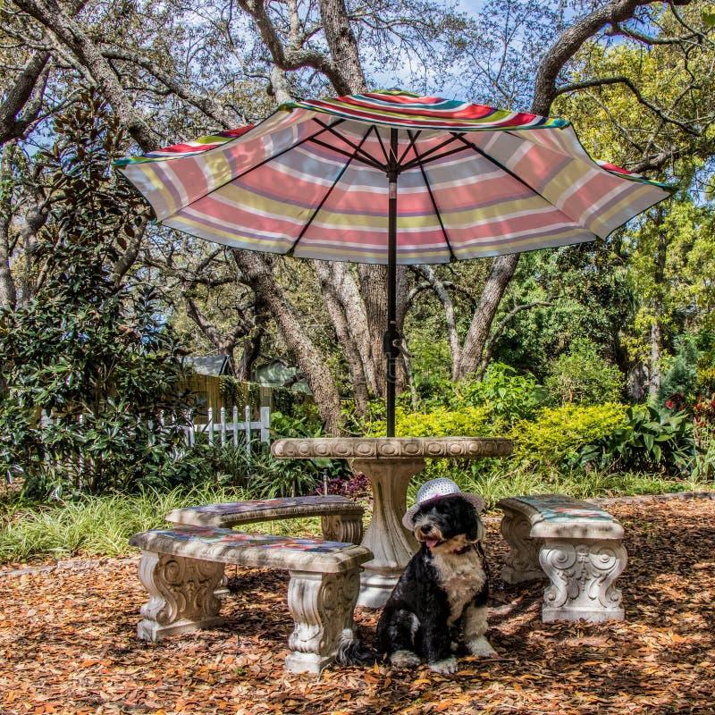Милая собака в саде под зонтиком стоковая фотография