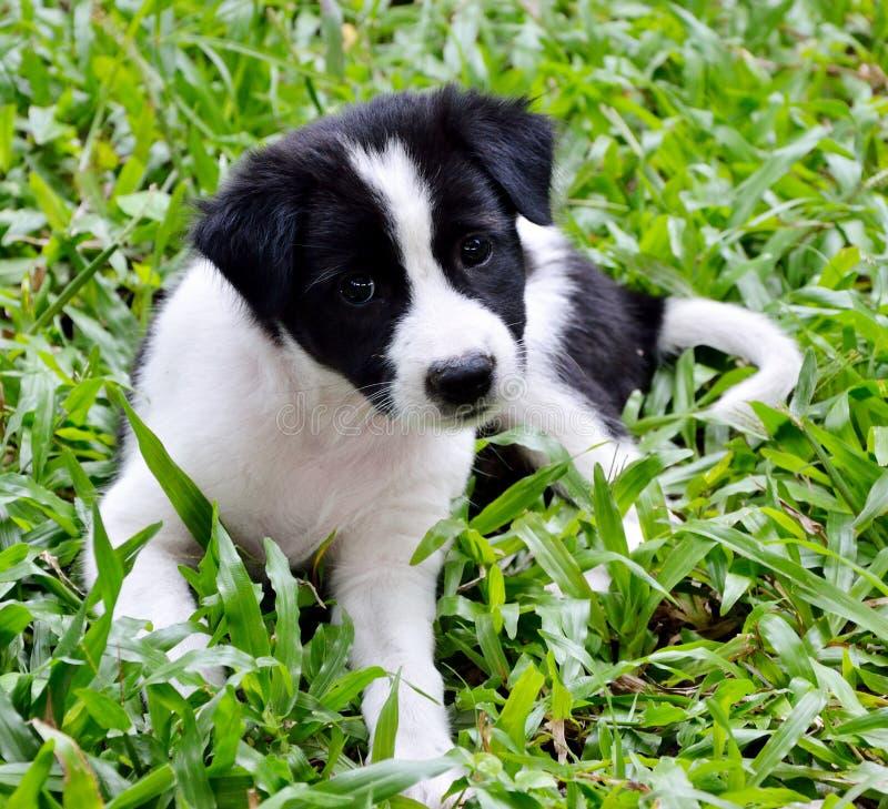 Милая собака коровы на траве стоковое изображение