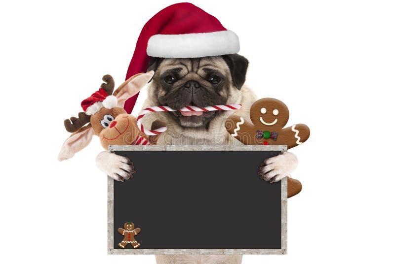 Милая собака мопса рождества при шляпа santa и тросточка конфеты, игрушки и печенья, задерживая пустой знак классн классного, стоковые фотографии rf
