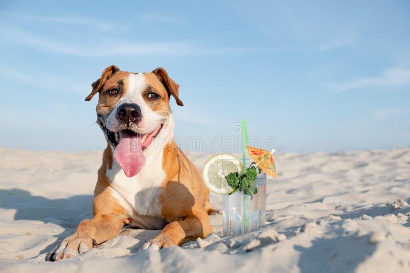 Милая собака на пляже и стекле холодного напитка коктейля стоковая фотография