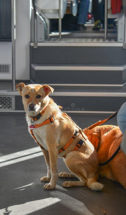 Милая собака сидя на поезде стоковое фото rf