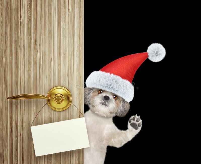 Милая собака shitzu в красной шляпе Санта Клауса рождества смотря вне вход двери дома с пустой карточкой Изолированный дальше стоковые изображения