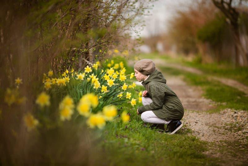 Милая счастливая страна маленькой девочки весной пахнуть желтыми daffodils стоковое фото