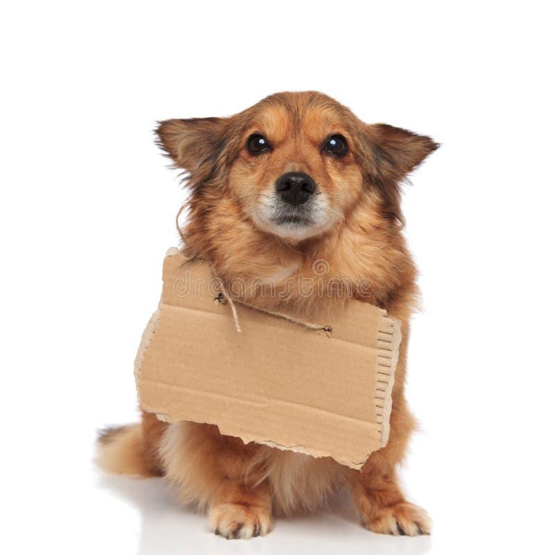 Милая умоляя собака делая щенка наблюдает смотрит вверх стоковое фото