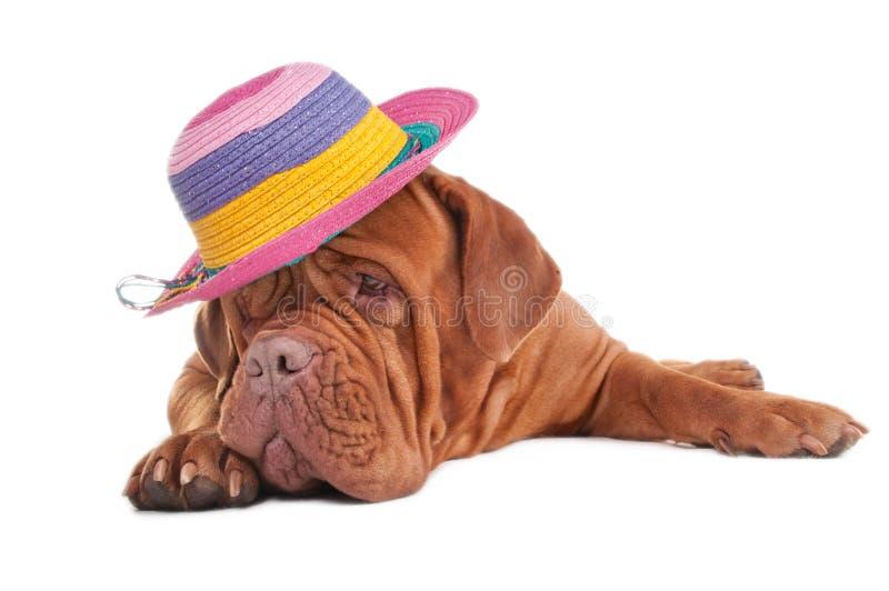 Милая унылая собака стоковое фото rf
