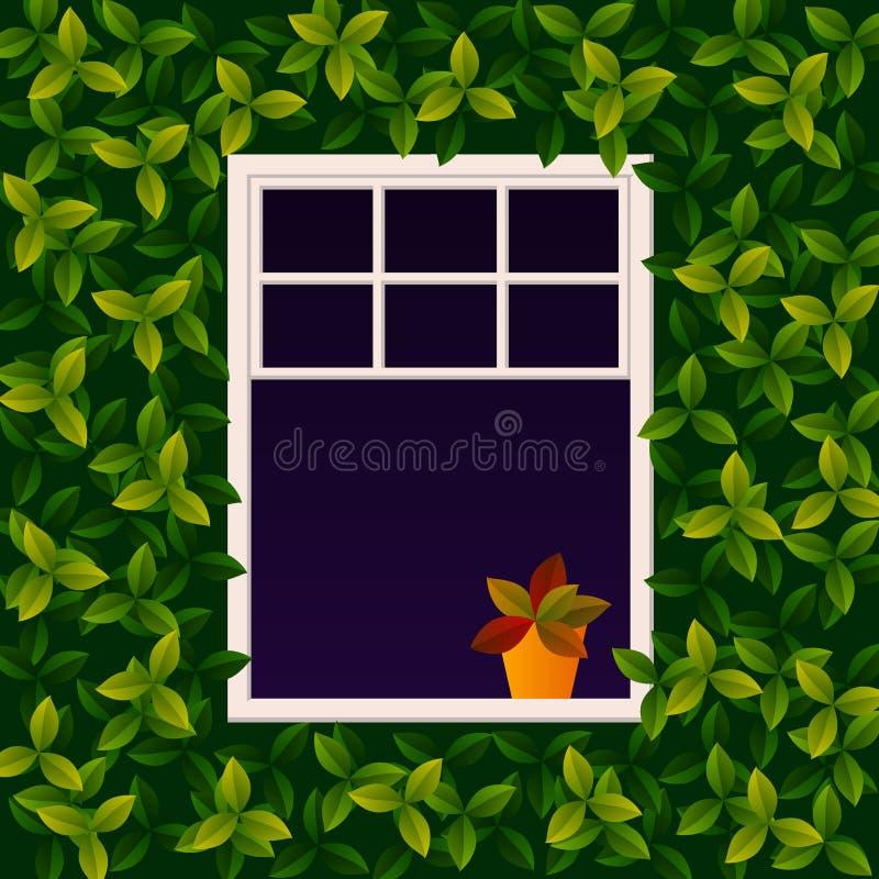 Милое белое окно, на открытом воздухе взгляд Стена покрыта с взбираясь заводом Цветок в стойках бака на windowsill Весна или лето иллюстрация вектора