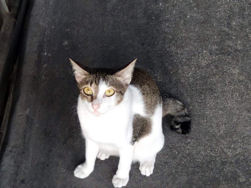 милое кота любознательное стоковое изображение rf